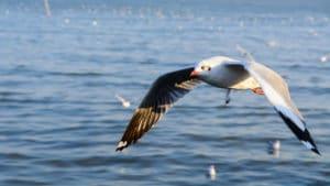 seagull control-removal nj
